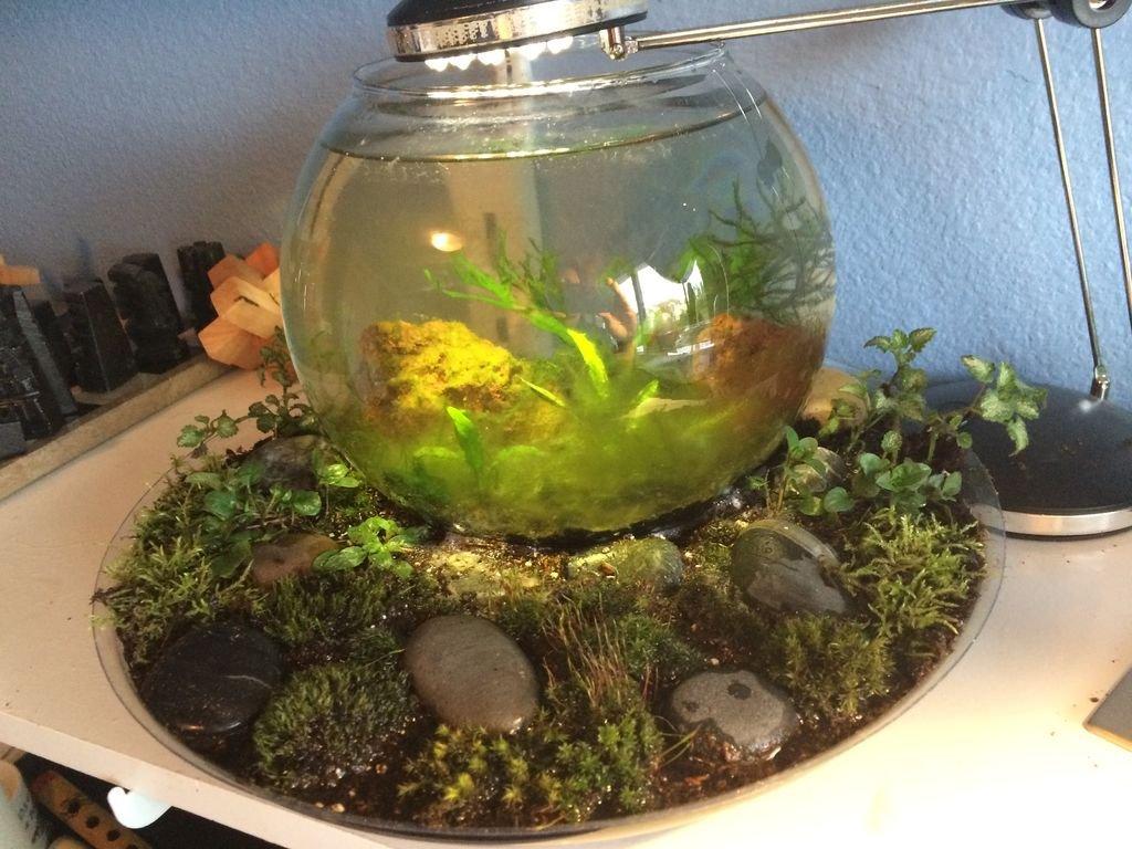 Декорирование аквариума своими руками фото 626
