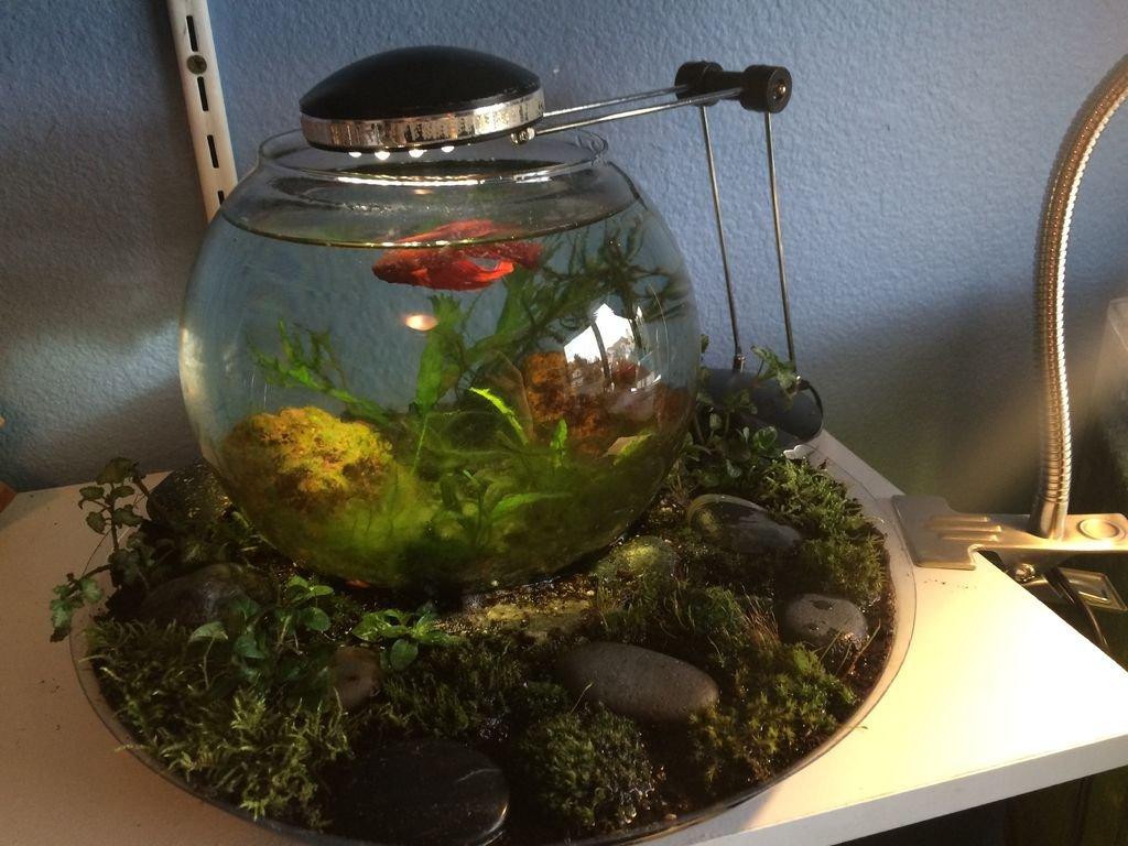 Круглый аквариум своими руками фото