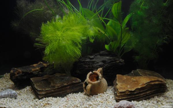 Аквариум без рыбок